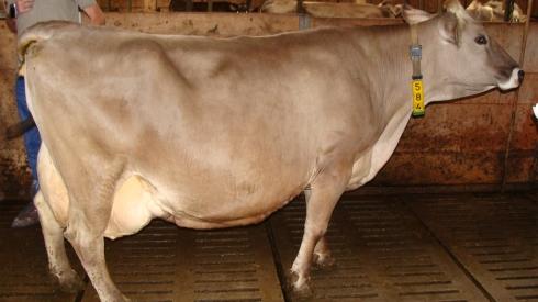 Brost Roana met 110.000 kg melk