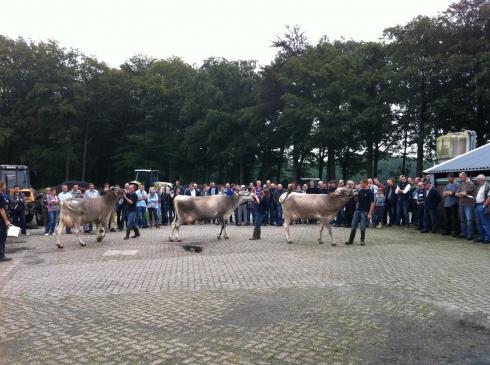 Veel publiek tijdens presentatie koeien
