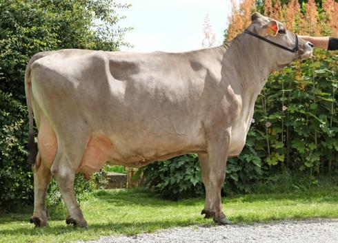 Simvitel Harmony bij 100.986 kg melk